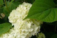 img-flowers-31