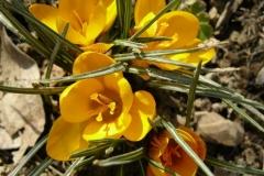 img-flowers-6