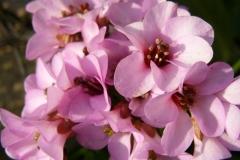 img-flowers-8