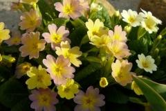 img-flowers-9